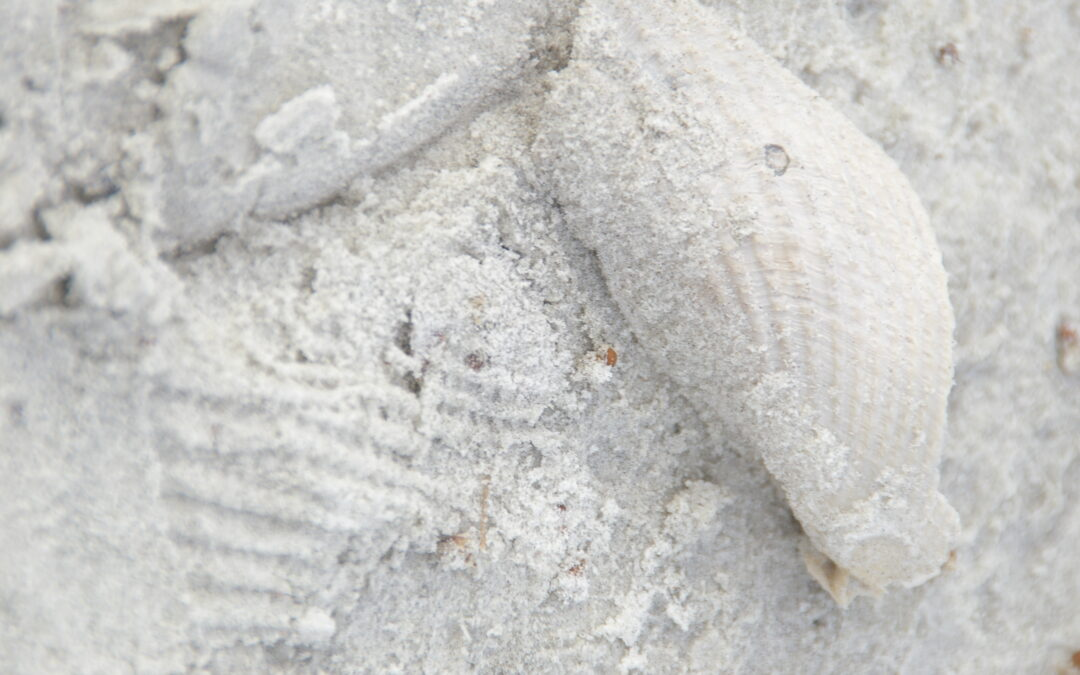 Florida Beach Detail